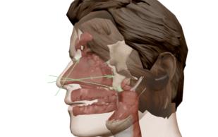 nasal-reflexology